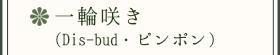 一輪咲き(Disbud・ピンポン)