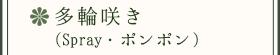 多輪咲き(Spray・ポンポン)